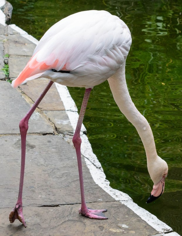flamingos-2-1-of-1