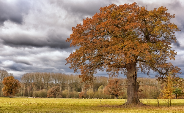 oak-tree-landscape
